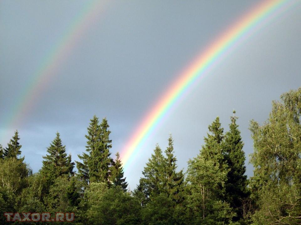 Двойная радуга над лесом на Ярославском шоссе.