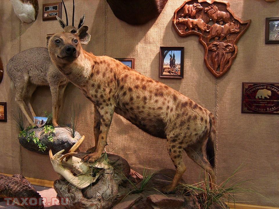 Чучела животных и сувениры на экспозиции по охотничьей тематике