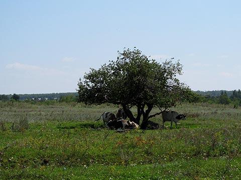 Саратовская сельва