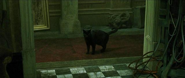 Нео дважды видит одну и ту же кошку