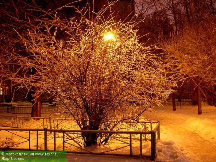 Галерея: Ночная Москва — Жар-Дерево