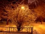Жар-дерево - увеличить фотографию